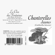 Yellowfoot chanterelle mushrooms Le Clos des Fontaines