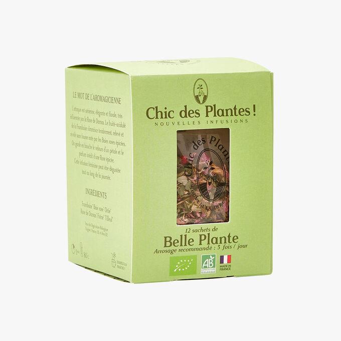 Belle plante Chic des Plantes !