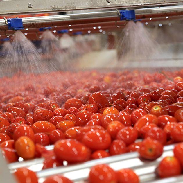 Mutti la tomate